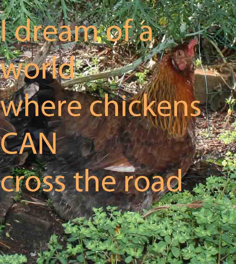 chooks can dream