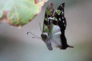 dead butterfly 008