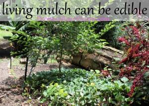 living mulch edible