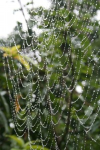 spiders web in mist Permaculture Visions