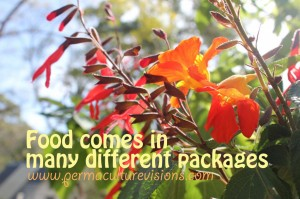 food-comes-in-different-packages_permaculturevisions-1024x682