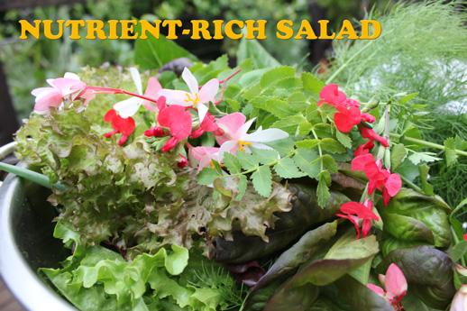 nutrient_rich_salad