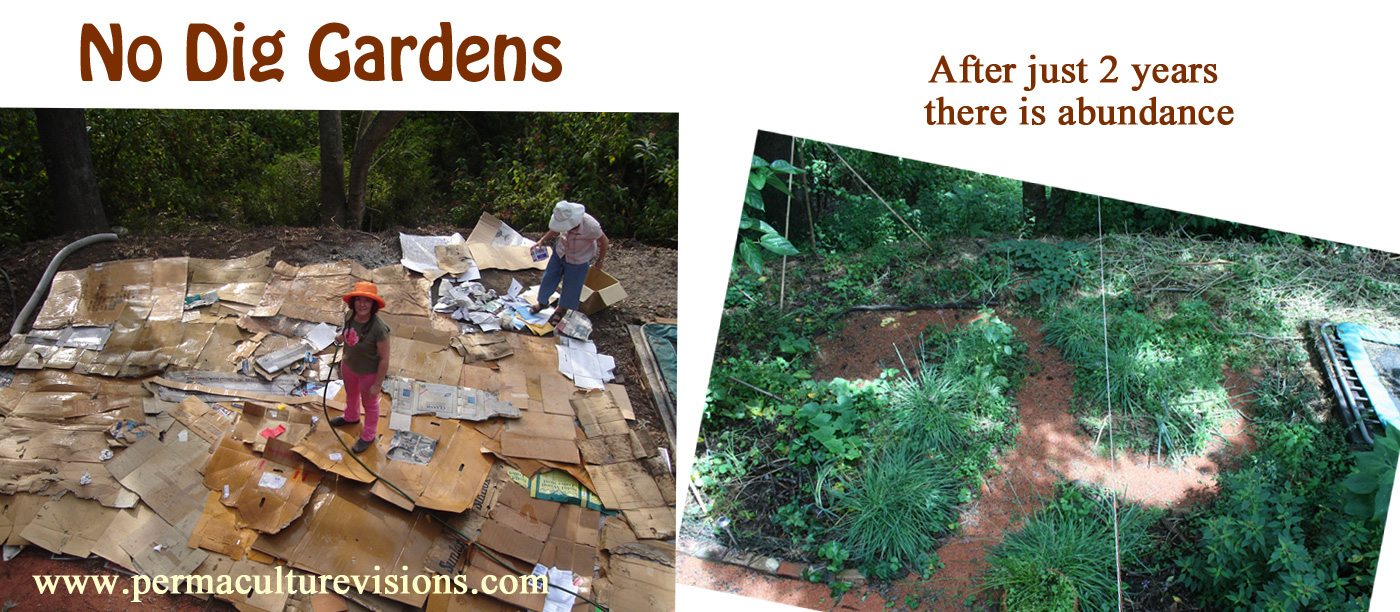 no dig gardens at Permaculture Visions after 2 years