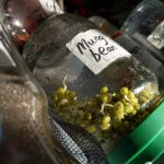 sprouting jar and seeds - a homely gift