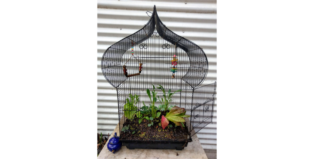 Recycled Birdcage with a wicking garden
