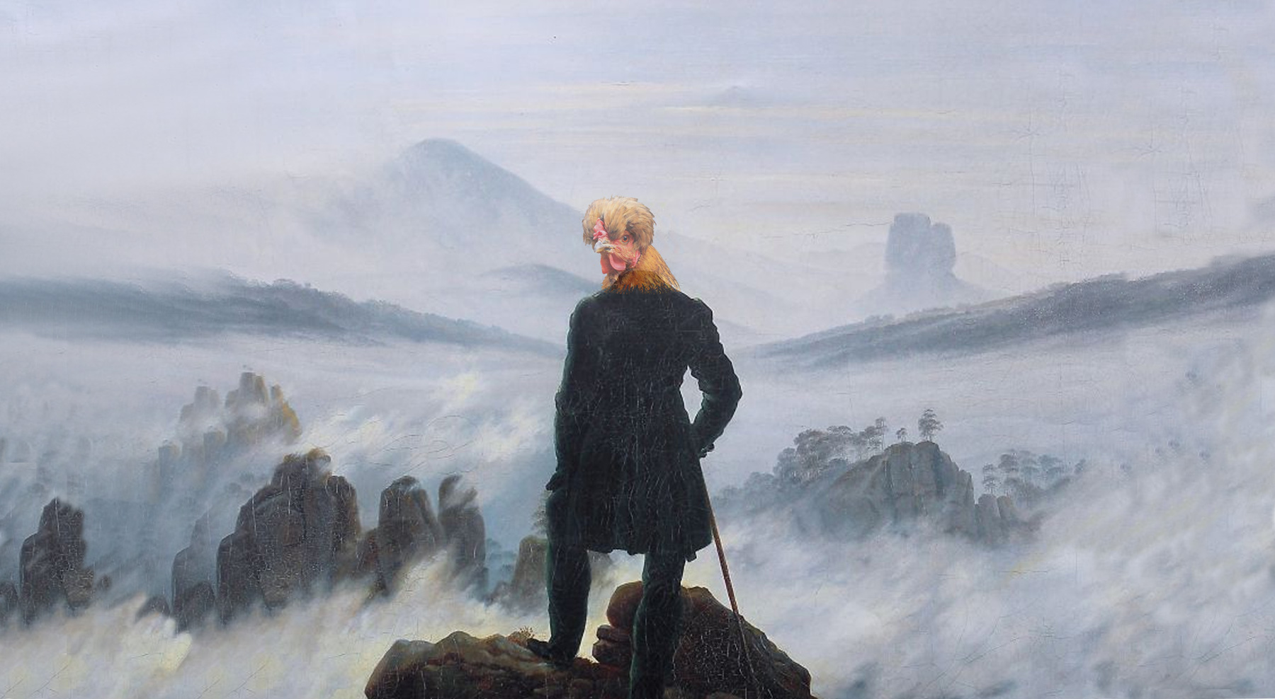 a hen looking back over her shoulder as she stands on a peak above a sea of mist